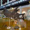 Hunterian Museum : Hunterian Museum, Glasgow, Scotland  http://www.hunterian.gla.ac.uk/ located within the University of Glasgow